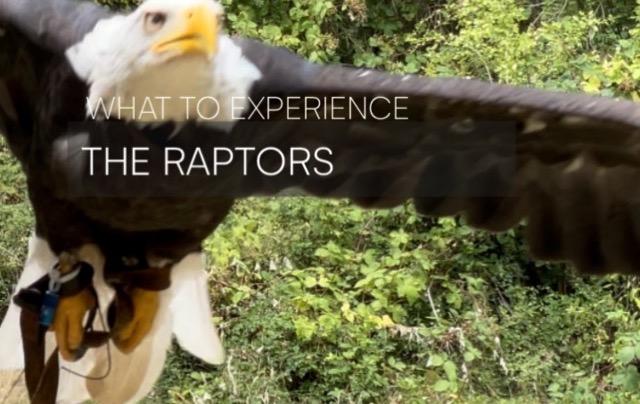 Cowichan Valley – Raptors